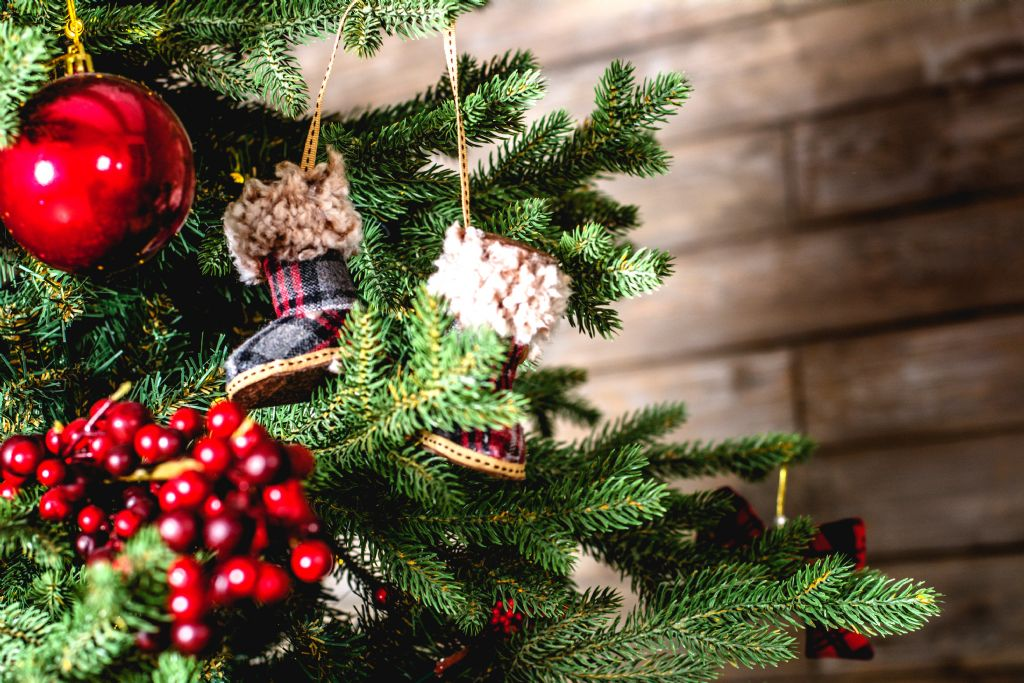 2019 Sustainable Christmas Tree Scheme Launched