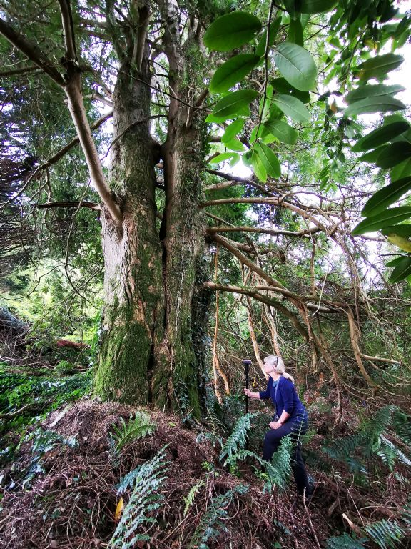 Celebrating the Unique Natural Heritage and Biodiversity of Castlewellan Forest Park