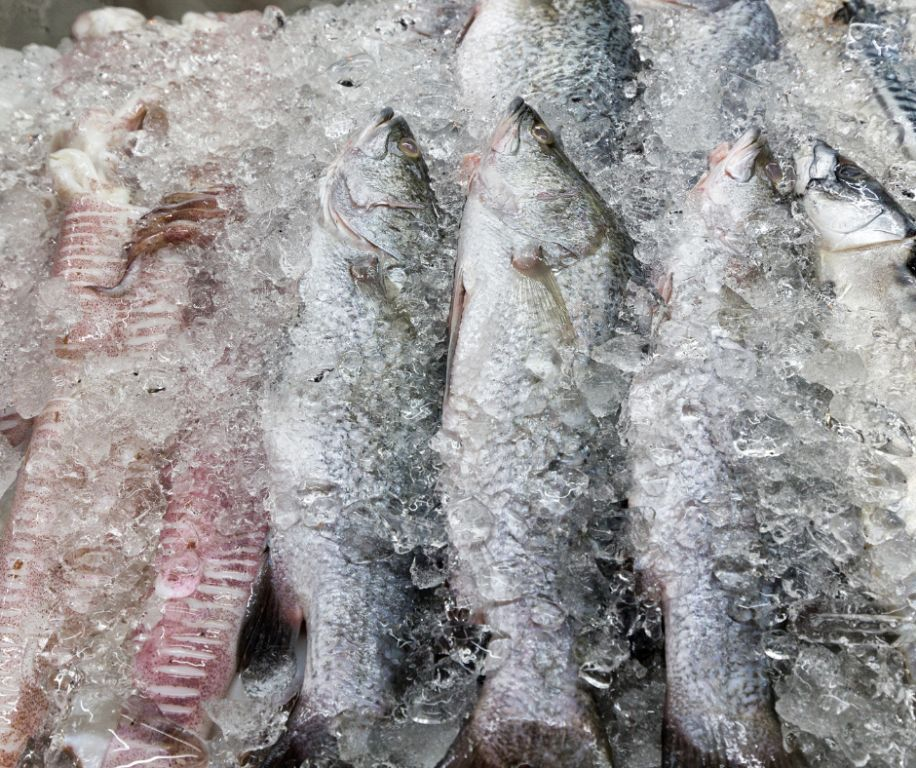 Fish and Fishery Products for Human Consumption